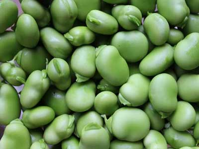 Broad Beans - Product Photo